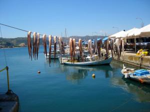 Oktopusse zum Trocknen aufgehängt, in Githio auf dem Peleponnes